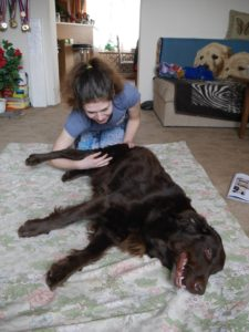 DensiaPhysio - Dornova metoda pro psy - ošetření Flat coated retrievra